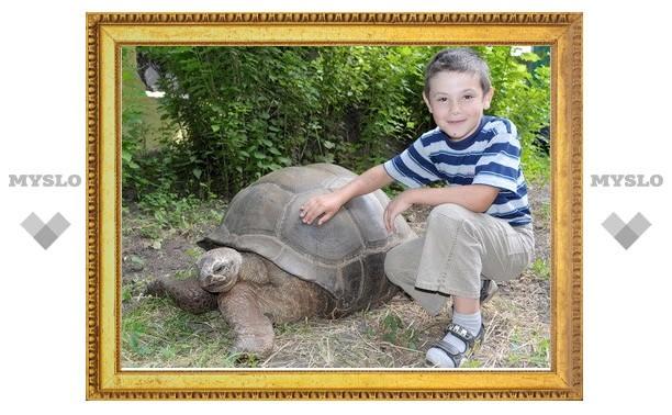 Черепаха Геркулес приглашает на прогулку