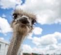 День поля-2016 прошел в компании страусов, кроликов и коз