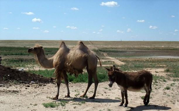 В мини-зоопарке Новомосковска поселятся верблюд и ослик
