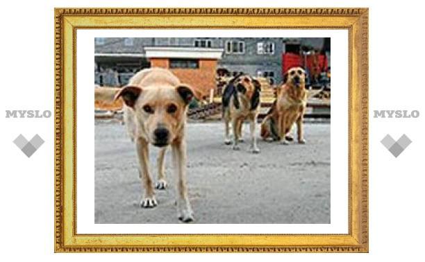В Туле построят новый приют для животных