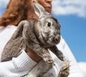 День поля в Тульской области: Гигантская техника, кроличьи шубы и мастер-класс по сыроварению
