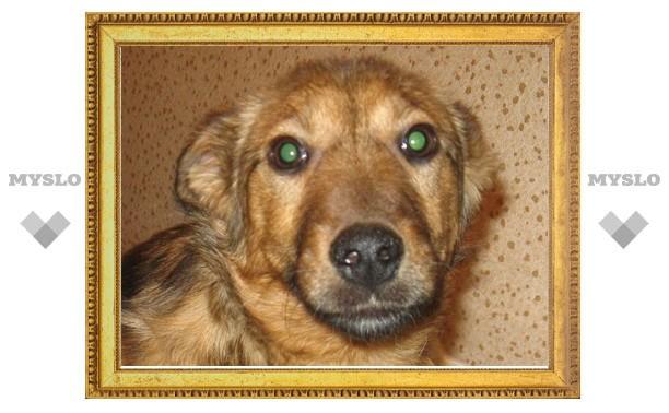 В Туле 6-месячный щенок ищет хозяина