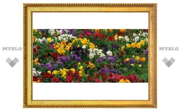 Тула утопает в цветах