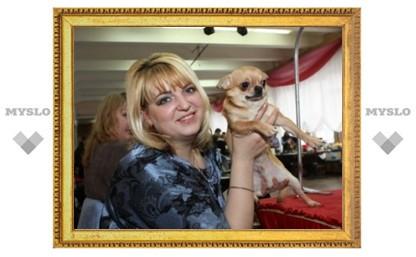 В Туле прошел конкурс красоты среди собак