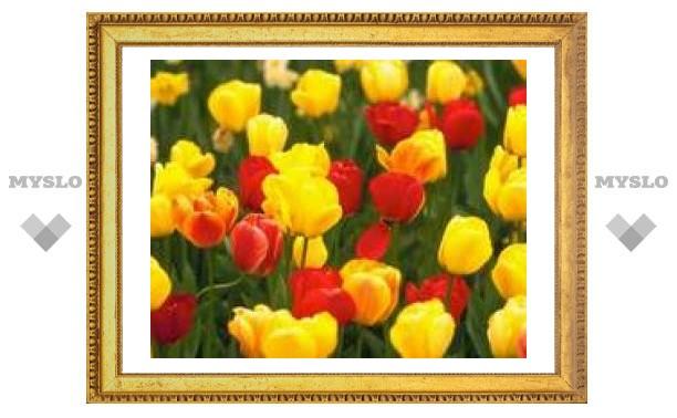 Тулячка подарила городу 1000 тюльпанов