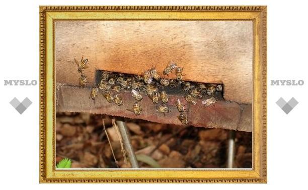 Под Тулой безработный построит «Пчелиный рай»