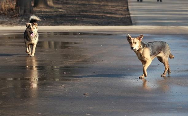 На решение проблемы с бездомными собаками выделено более 5 млн рублей