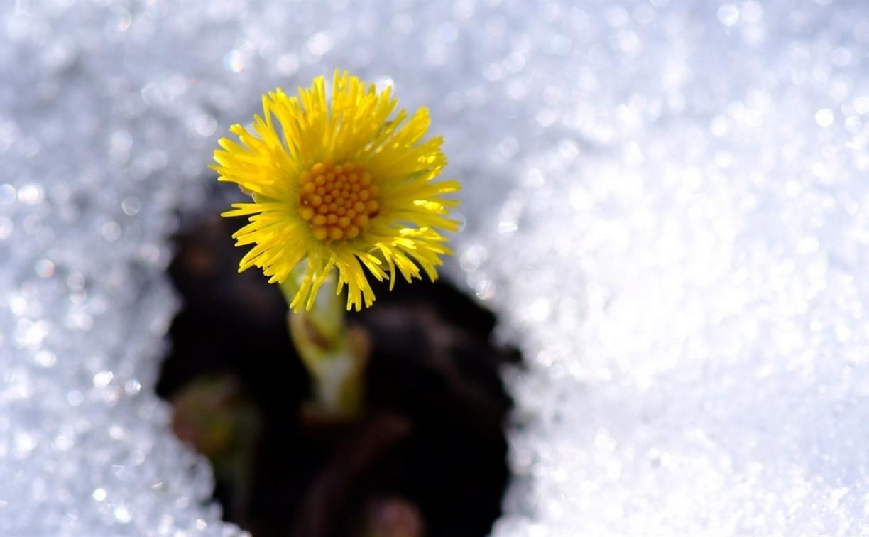 Погода в Туле 25 марта: до +7 градусов, сухо и легкий ветер