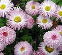 «Федотовская весна» вернулась в Федоровку