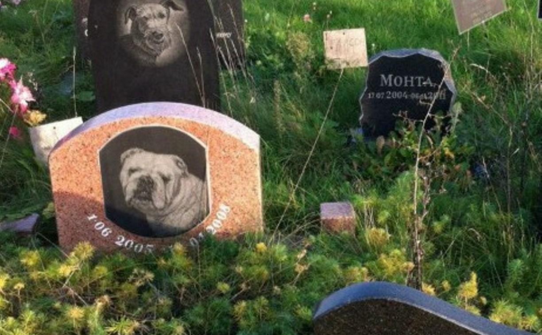 Туляки обвиняют ветеринарный центр в убийстве питомцев