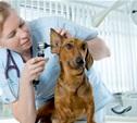 Тульский центр ветеринарной медицины: «Поможем здоровью ваших питомцев»