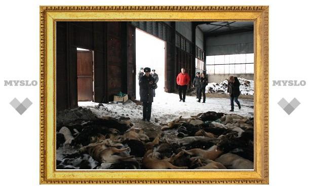 Тульская полиция и прокуратура выясняют обстоятельства убийства 150 собак