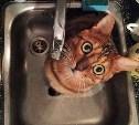 Где в Туле 29 июня не будет воды