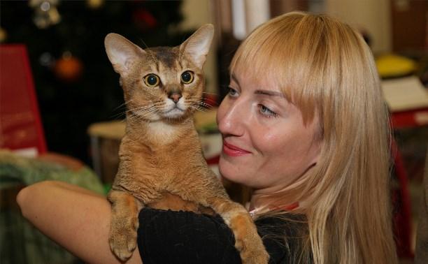 В Туле выбрали лучших кошек