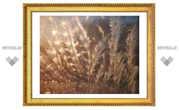 28 января: Звезды ночью блестят - будет в Туле мороз