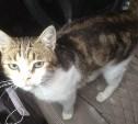Тульский кот-наркокурьер вошел в российский топ-10 «кошачьих новостей»