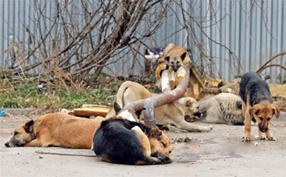 Госдума не занимается вопросом бездомных собак