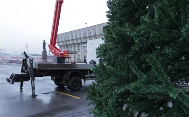 Новогоднюю ёлку в Туле установят до 1 декабря
