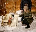 В Туле на ул. Металлистов открылся «Двор хаски»: фоторепортаж