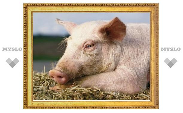 Подозрение на африканскую чуму свиней не подтверждено