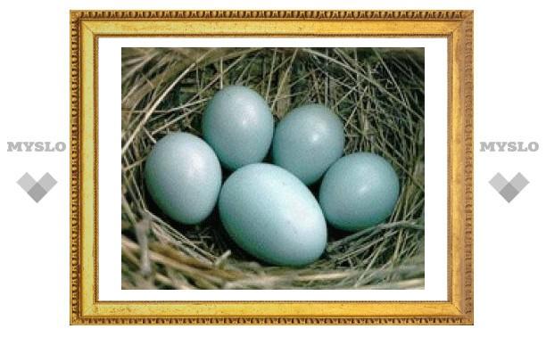 В Туле дорогие яйца