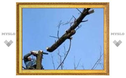 В Туле продолжают обрезать деревья