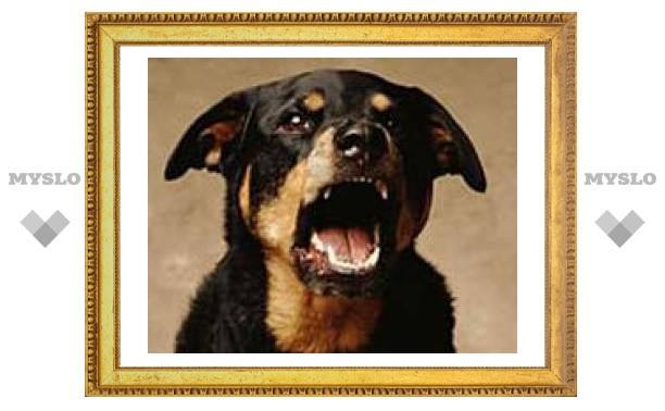 Туляков кусают собаки