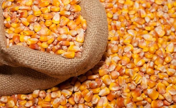 В Тульской области волосатый клещ испортил семь тонн кукурузы