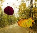 Погода в Туле 11 октября: до +14 градусов, ветрено, небольшой дождь