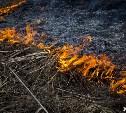 МЧС: в Тульской области ожидается высокий уровень пожароопасности