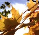 Погода в Туле 11 октября: без осадков, днём до +16 градусов