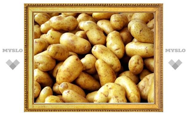В Тульской области картофель погубил жителей Узбекистана