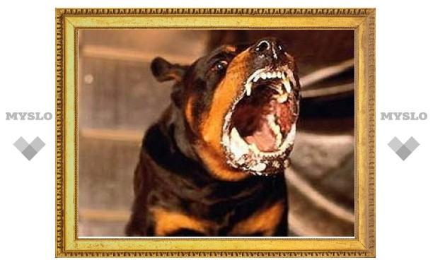 Тульские ветеринары борются с бешенством