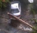 В Пролетарском районе упавшее дерево повредило автомобиль