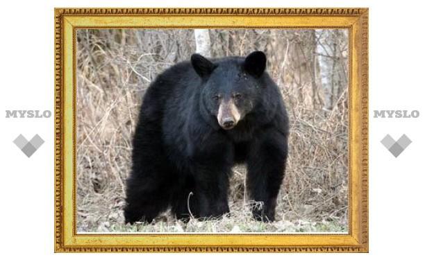 Канадских автомобилистов убило сбитым на дороге медведем