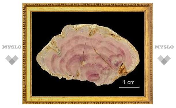 Найден цвет возрастом 150 миллионов лет