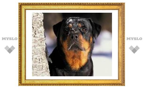 В Туле потерялись 5 собак