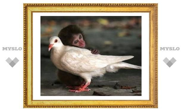Животные мыслят также как люди