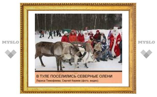В Тулу приехали северные олени!