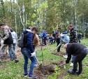 В Туле в Комсомольском парке высадили 200 саженцев деревьев