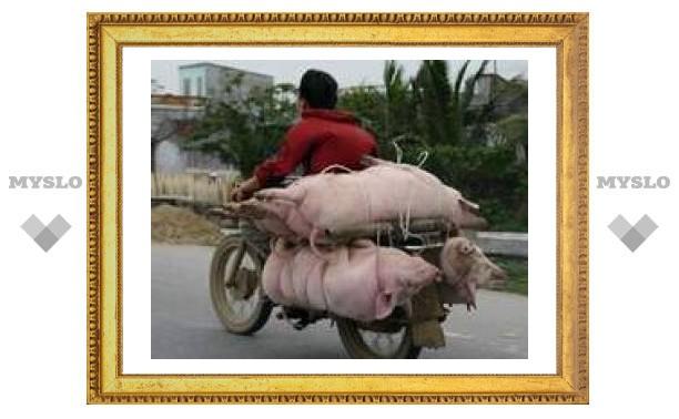 Автомобили заправят свининой