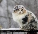 В Тульской области 14 января снежно и ветрено