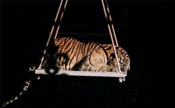«Полосатый рейс» в Тульском цирке