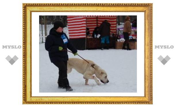 Собаки всех пород собрались в Туле