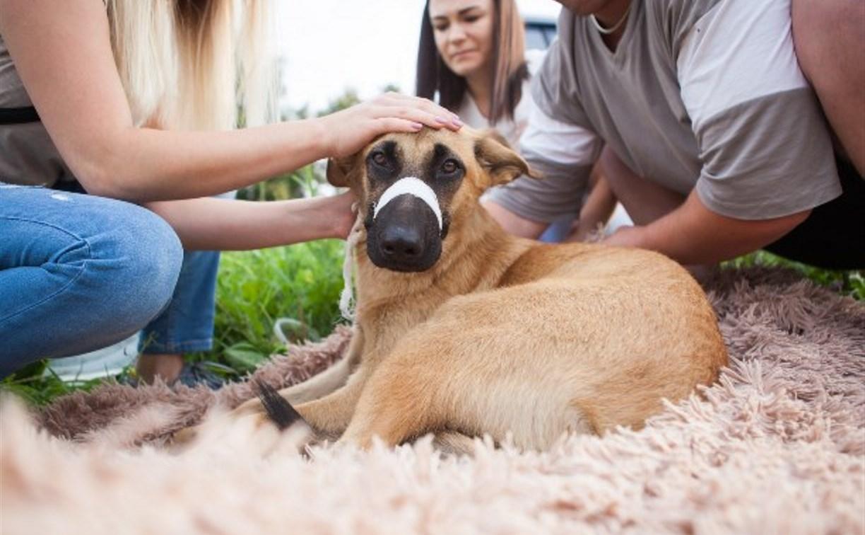 Читатели Myslo собрали деньги на лечение и реабилитацию сбитой в Туле собаки