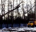 В Туле на Щегловской засеке дерево упало на трамвайные пути