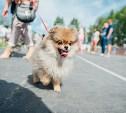 Всероссийская выставка собак в Туле: серьезные сенбернары, изящные пудели и милые шпицы