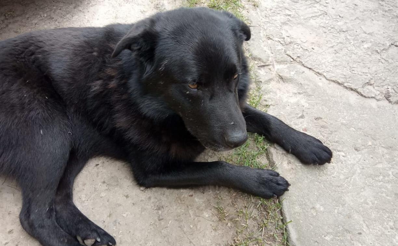 Жительница ясногорского села заказала соседу убийство собаки