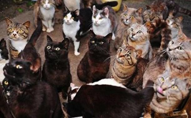 Под Тулой 17 кошек оккупировали квартиру пенсионерки и выживают соседей