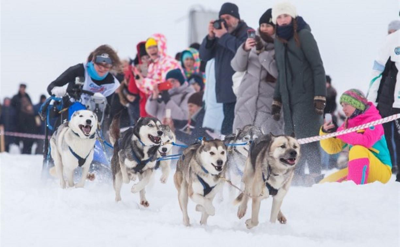 Катание на собачьих упряжках и в санях: Куликово поле приглашает туляков на праздник «Большой тур»